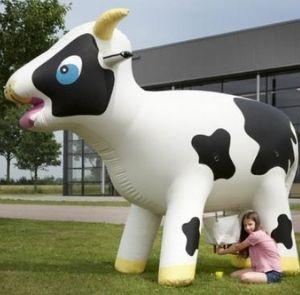 vaca del taller de queso